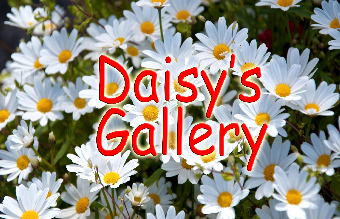 Daisys-Gallery